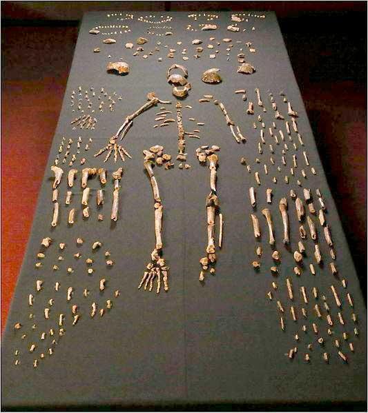 Bestattung von Mulier-Homo naledi aus der Höhle Rising Star (Südafrika), Ursprüngliche Datierung 2,5 Millionen Jahre, neueste Datierung nach der Uran-Thorium Methode datieren die Fossilien allerdings auf ein Alter zwischen 335 000 und 236 000 Jahren (Dirks, Paul et al., 2017); Foto: Wikimedia Creative Commons 4.0; User: Paul Venter